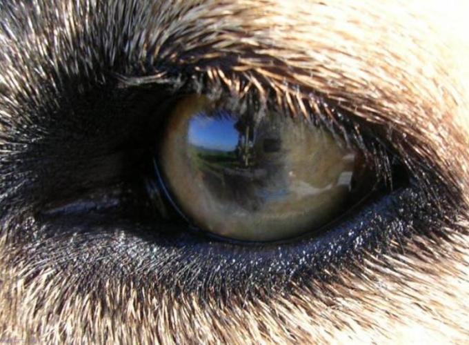 Страдают ли собаки и кошки близорукостью и дальнозоркостью?