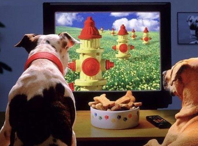 В столице предложили открыть кинотеатр для домашних животных