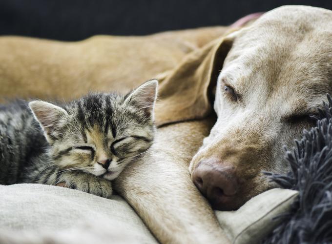 Ученые составили психологический портрет владельцев кошек и собак
