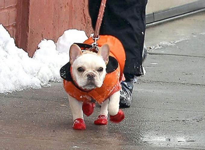 В Москве владельцам собак советуют обувать питомцев