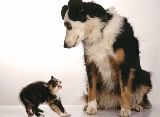 Собаки или кошки?