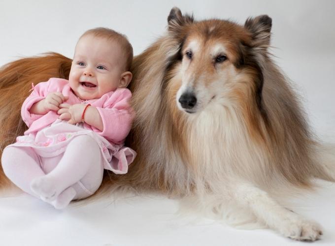 Как воспитать собаку для детей