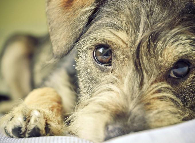 Хромота у собак
