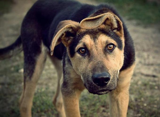 Собаки: породистые и беспородные