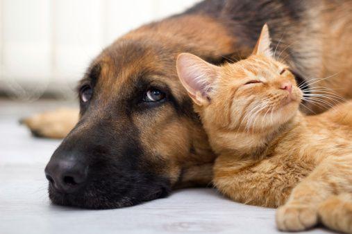 Кошки и собаки стали официальными жителями