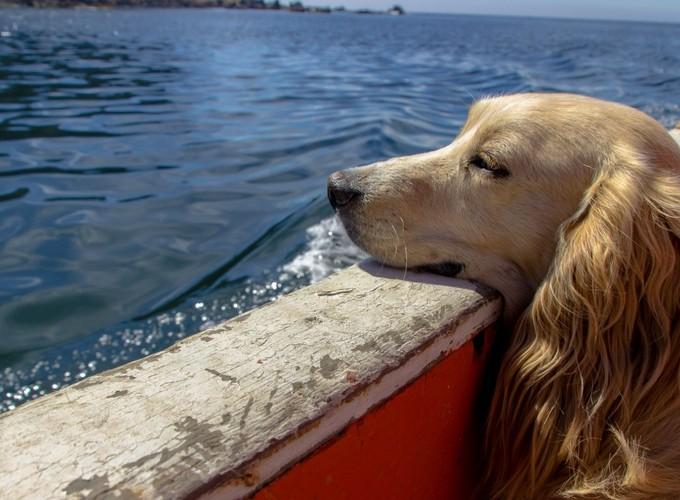 От чего зависит продолжительность жизни собаки
