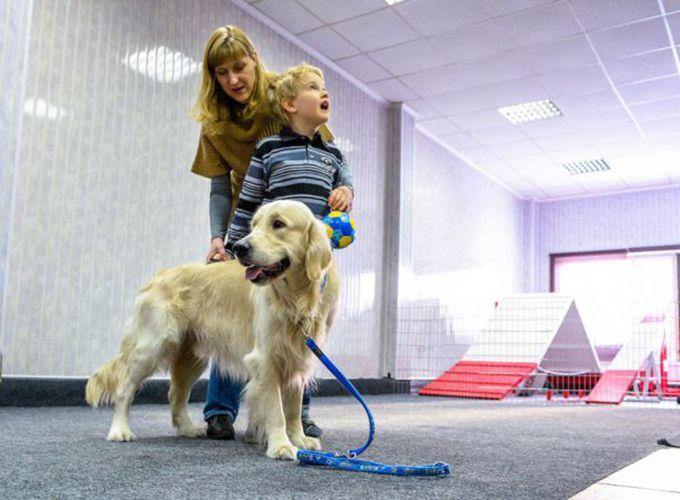 Лечащие собаки. Лечение канистерапией