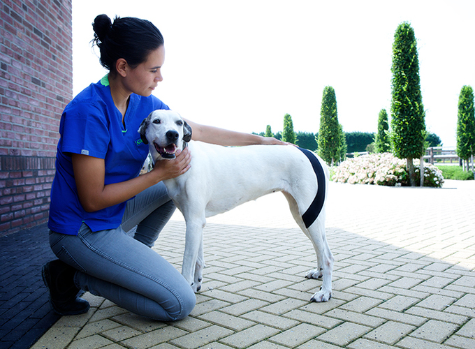 Ветеринарное тейпирование (семинар)