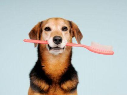Уход за зубами собак и кошек