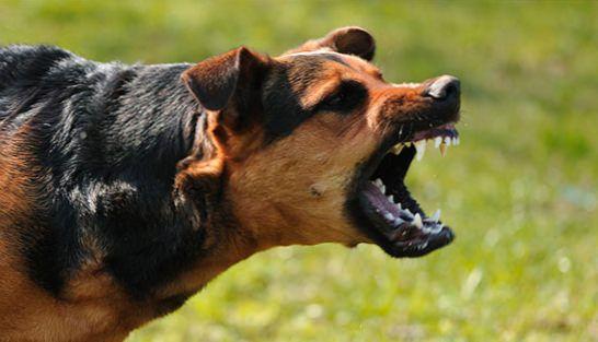 Бешенство у собаки. Симптомы, профилактика и лечение болезни