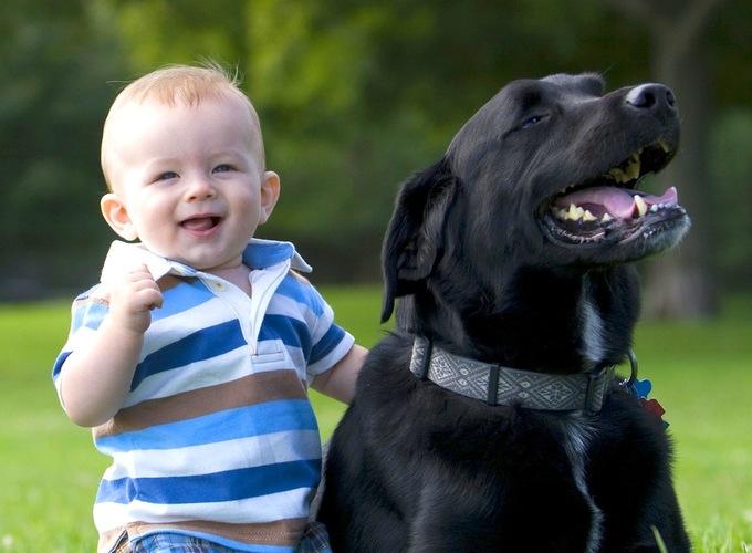 Контакт с домашними животными укрепляет иммунитет ребёнка