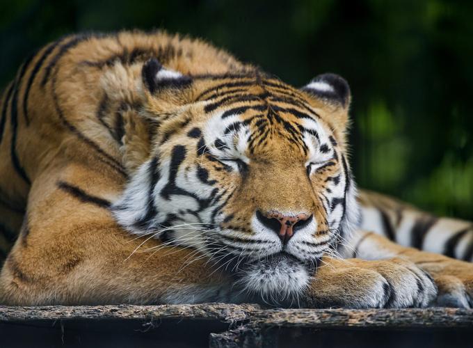 Могут ли животные видеть сны?