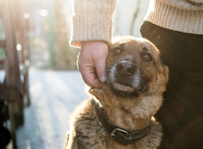 Люди и звери. 10 парадоксов гуманизма