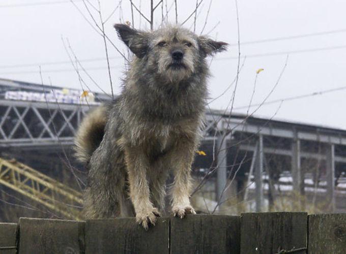В Москве сделают памятник бездомным животным