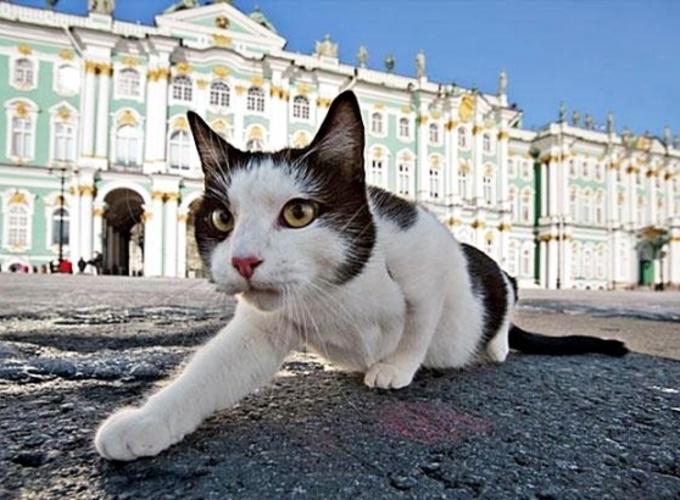 """""""Эрмитажный кот"""" станет товарным знаком"""