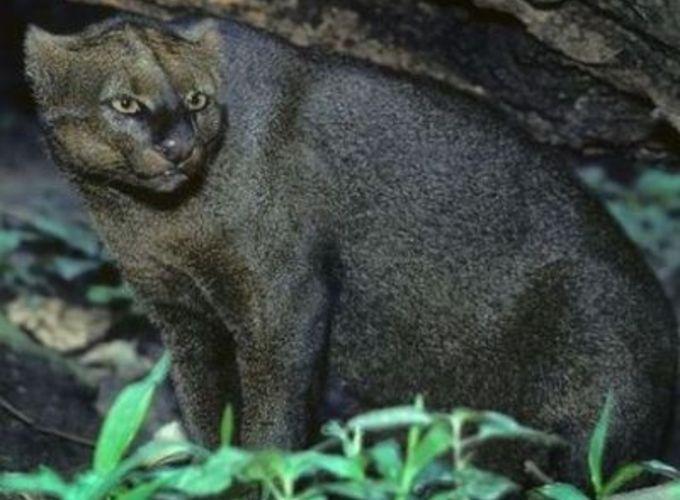 Древние собаки были похожи на кошек
