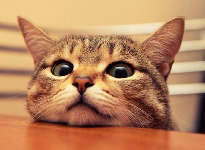 Питание кота после кастрации