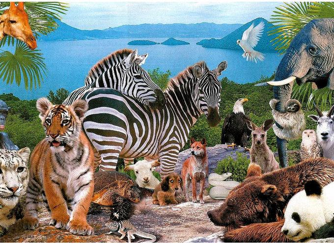 Как прошёл День защиты животных