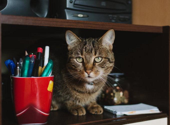 Людей признали гостями в домах кошек