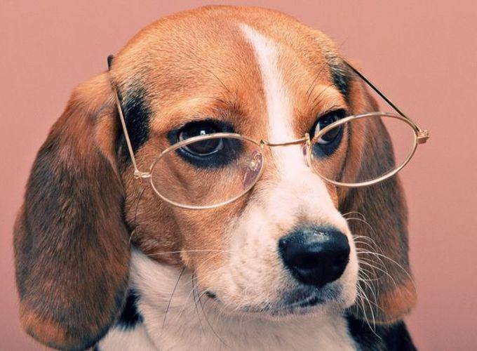 Каким образом собаки чувствуют хозяев