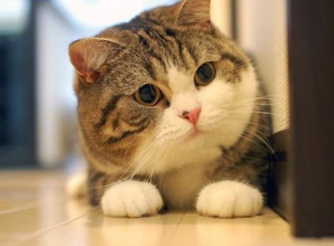 Кошки распознают выражение наших лиц