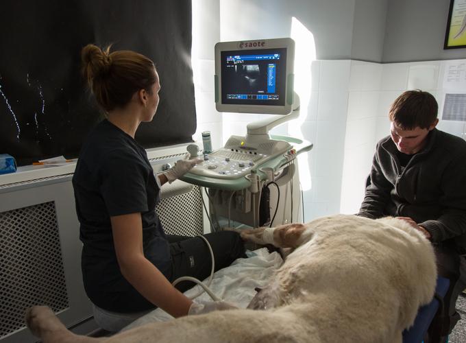 Как готовить животное к УЗИ и рентгену
