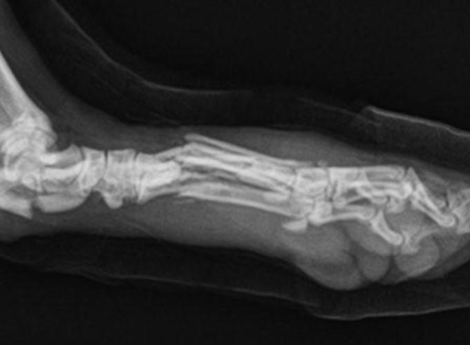Переломы у собак и кошек