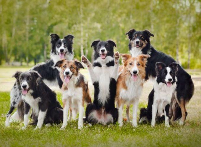 Ученые нашли прародину собак