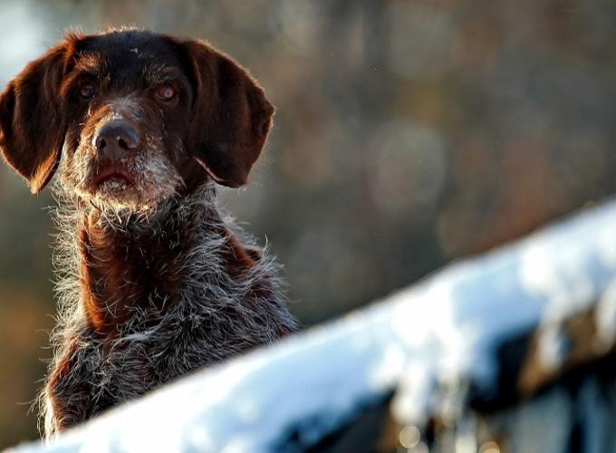 В Москве создадут службу поиска животных