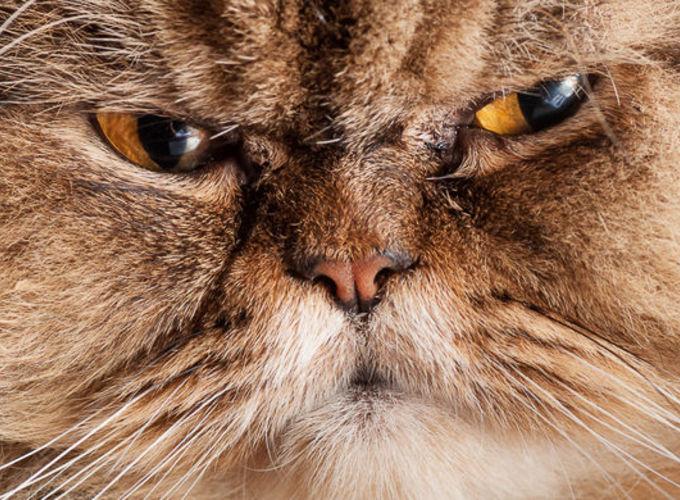 Кошачий паразит вызывает тревожные расстройства у людей