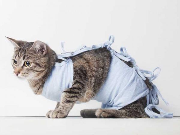 Операции на желудке кошкам